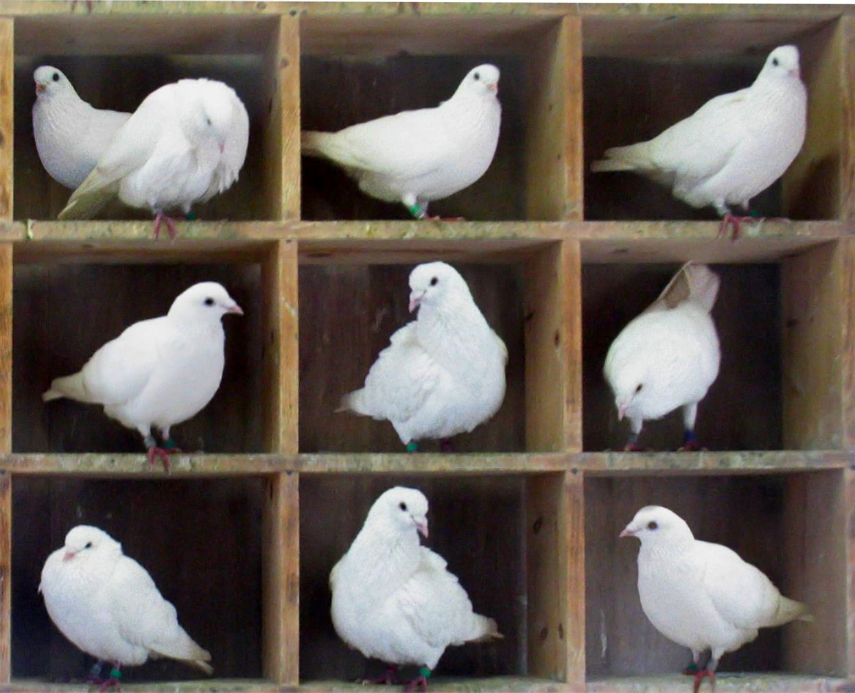 pigeonhole_canreuse